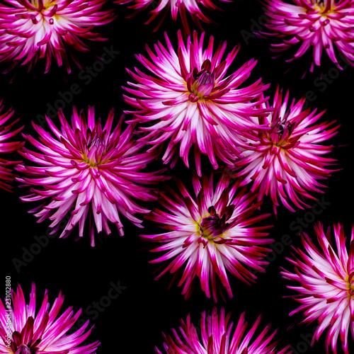 Foto Murales flowers