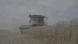 Combine Harvester harvests Barley - Slowmotion - Log Color - 231024853