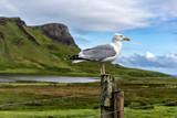 Möve steht auf Pfahl dahinter die Highlands von Schottland
