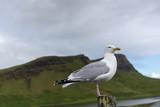 Möve steht auf Pfahl eines Zauns in den Highlands von Schottland