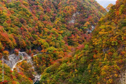 Autumn landscape forest © leungchopan