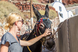 woman's hand caressing donkeys in a place in Spain