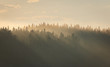 Misty Maritime Sunset with Light Rays in Forest