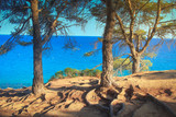 Mediterranean nature with trees on sea shore - 231056816
