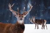 Noble deer in the winter forest. Winter wonderland. © delbars