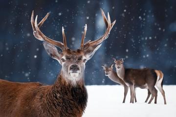 Noble deer in the winter forest. Winter wonderland.