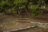 wooden stairs path way in park outdoor nature place for walking between trees in dry warm summer weather