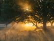 Morning golden sunrise light - 231065831