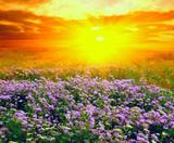 Summer landscape in steppe - 231066293