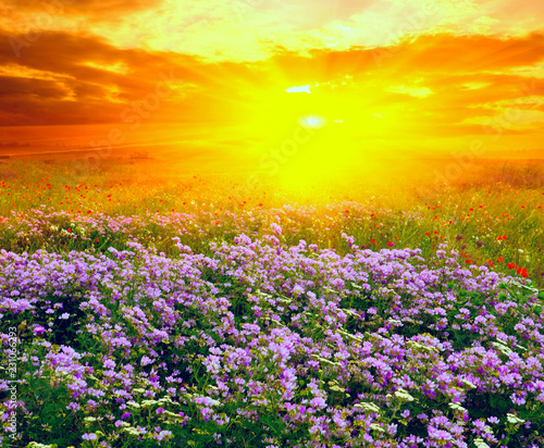 Poster Summer landscape in steppe