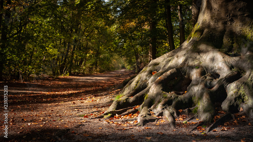 The winding roots of an old tree in the Wood.