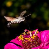 Flying feed