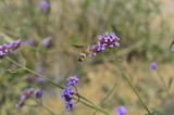 Bee honey in the flying insects - 231086267