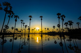 Palm tree silhouette and reflection. - 231107899