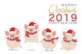Merry Christmas greeting card with cute piggy in red winter costume for Christmas. Animal cartoon character vector. 2019 The year of the pig.