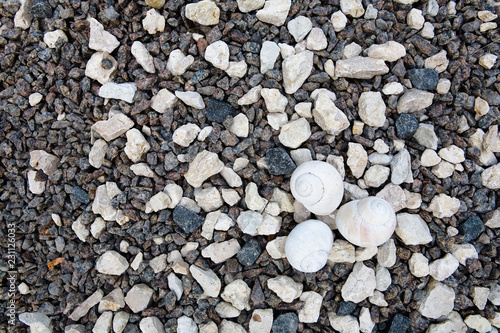 Small light shells lie on the stones. - 231126033