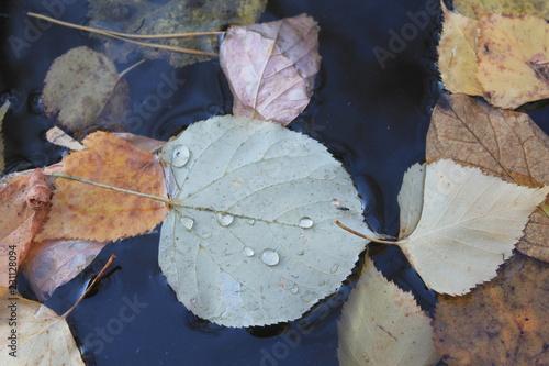 Foto Murales Лепестки осени