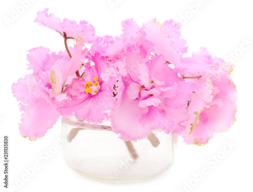 Różowe fiołki piękne kwiaty.