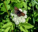Schmetterling *