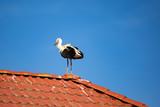 Storch auf dem Dach