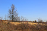 leafless trees in a meadow with dry grass - 231183851