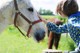 The boy touched the horse's head while standing at the fence of the paddock - 231194487