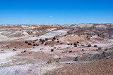 Petrified Forest NP 5