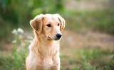 portrait of a mongrel dog