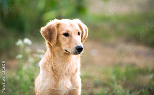 Leinwandbild Motiv portrait of a mongrel dog