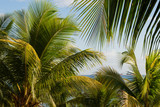 Coconut trees with blue sky background in Mauritius Island - 231239024