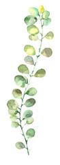 watercolor leaf branch © ivofet