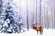 Noble deer in a winter fairy forest. Snowfall. Winter Christmas holiday image. Winter wonderland.