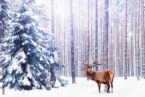 Leinwanddruck Bild Noble deer in a winter fairy forest. Snowfall. Winter Christmas holiday image. Winter wonderland.