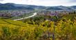 In den Weinbergen oberhalb von Gengenbach im Kinzigtal - 231294858