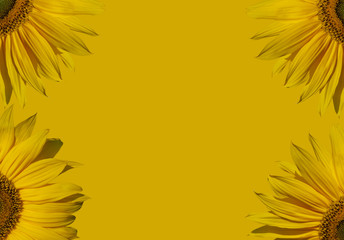 Part of sunflowers composition.
