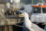 Close up of a seagull at the seaside