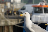 Seagull waiting for an opportunity to steal some food
