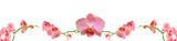 Vega Orkide Çiçeği Pembe Panoramik