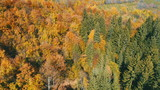 aerial flying abouve forest in autumn with colorful red and yellow trees on sunny day