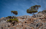 Lone mountain tree