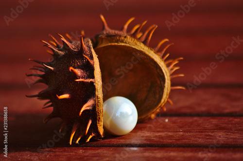 Pieksig-stachelige Rosskastanie mit weißer Perle im Herbstlicht - 231388658