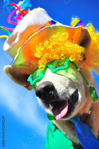 Leinwanddruck Bild funny party dog