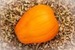 pumpkin against dry leaves - 231402299