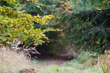 Waldweg im Herbst - 231415630