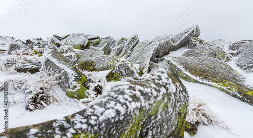 Iced moss-covered rocks under a thin layer of snow and ice. - 231421808