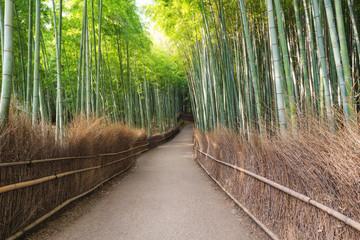 Japan travel destination landmark, Arashiyama Bamboo Forest in Kyoto © sasinparaksa