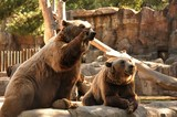 What animals are kept in the zoo and not only. Wildlife zoos wild forest. - 231446481