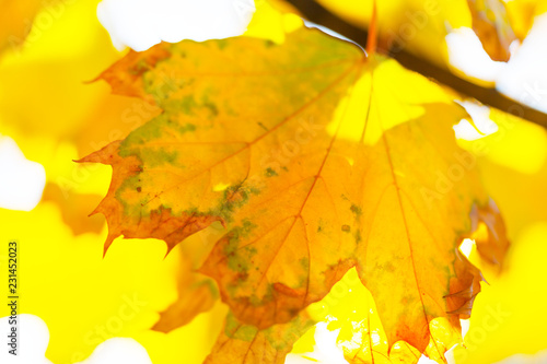 Autumn background with leaves - 231452023