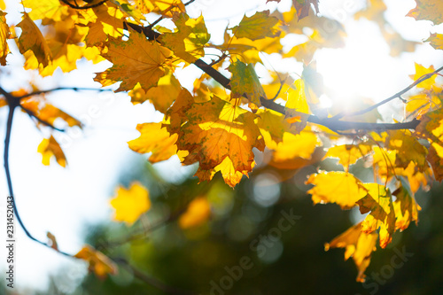 Autumn background with leaves - 231452043