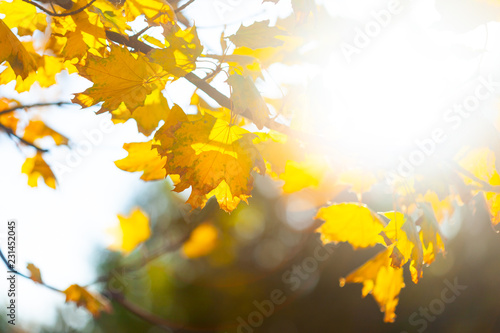 Autumn background with leaves - 231452045